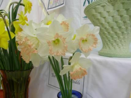 Daffodil Show 1
