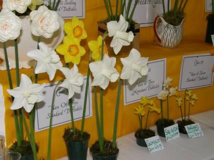 Daffodil Show 2