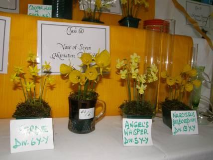 Daffodil Show 3