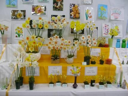Daffodil Show 4